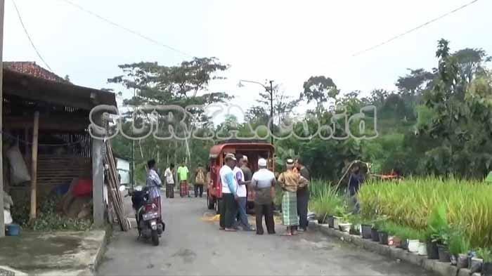 Geger Serangan Tawon Sliring di Magetan, Seorang Nenek Tewas, 7 Orang Lainnya Dirawat di RS